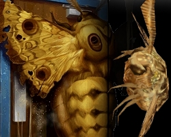 [عکس: moth.jpg]